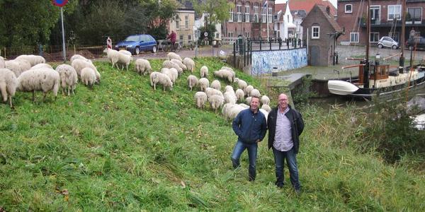 Pilot ecologisch groenbeheer in Ooltgensplaat