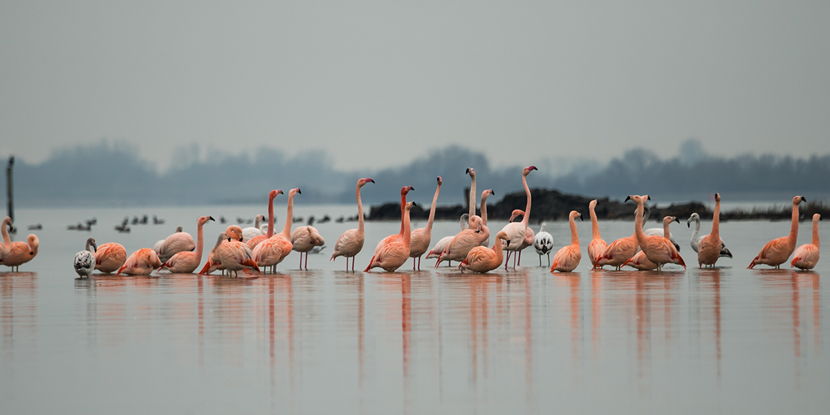 Flakkeese flamingo's gaan viral