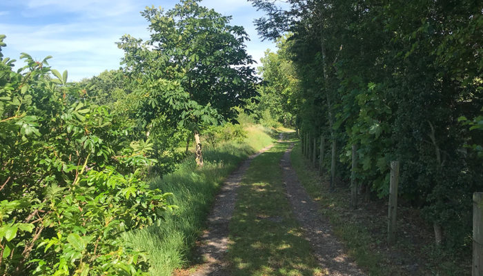 Unanieme steun voor motie kerkenpaden – Klarebeekpad afgesloten